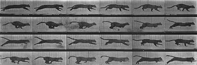 Album sur la décomposition du mouvement:Animal Locomotion: chat-Eadweard Muybridge-Giclee Print