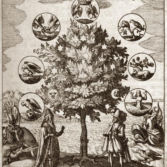 Alchemical Tree, Philosophia Reformata-Middle Temple Library-Photographic Print