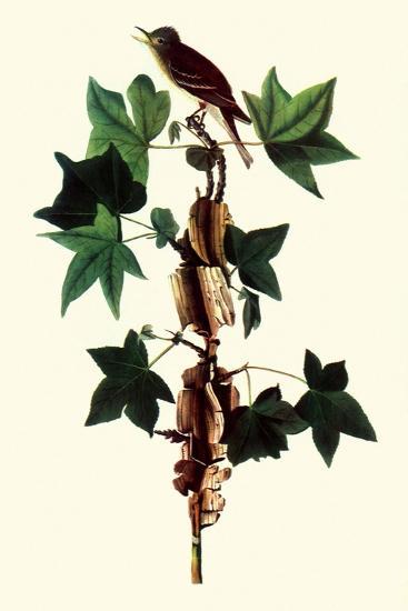 Alder Flycatcher-John James Audubon-Giclee Print