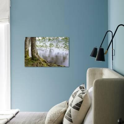 Alder Trees Over Lake Crescent Olympic National Park Washington Usa Photographic Print Jaynes Gallery Art Com