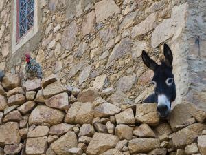 Hen and Donkey, Tizgui, Anti-Atlas Mountains by Aldo Pavan