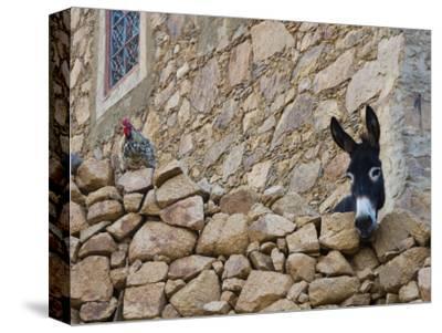 Hen and Donkey, Tizgui, Anti-Atlas Mountains