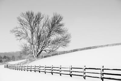 Along the Lane II by Aledanda
