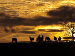 Horses at Sunset by Aledanda