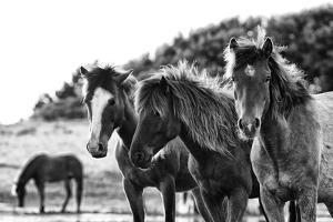 Horses Three by Aledanda
