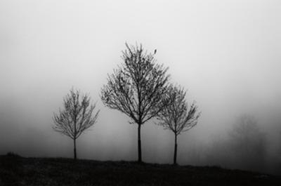 In the Fog Crop by Aledanda