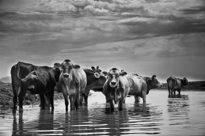 In the River by Aledanda