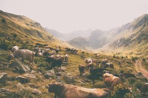In the Valley by Aledanda