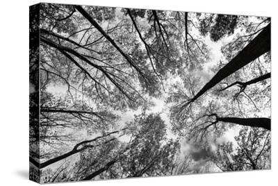 Looking Up I BW