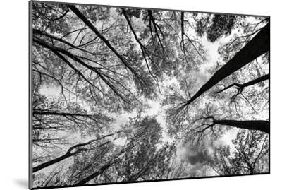 Looking Up I BW by Aledanda