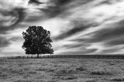 Majestic Crop by Aledanda