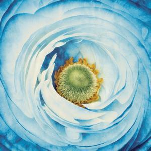 White Peony with Blue by Aledanda