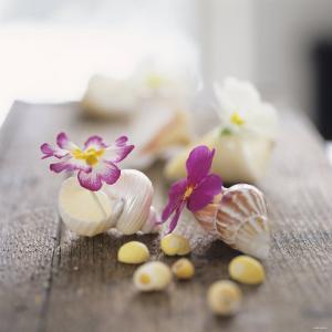 Primroses in Empty Snail Shells by Alena Hrbkova