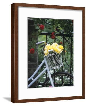 Yellow Roses in Bicycle Basket, Red Climbing Roses Behind