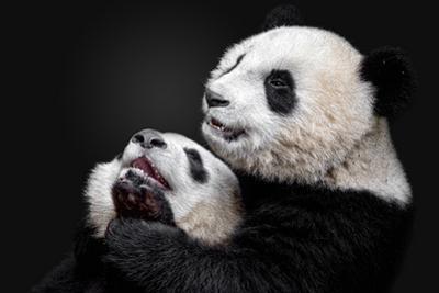 Pandas by Alessandro Catta