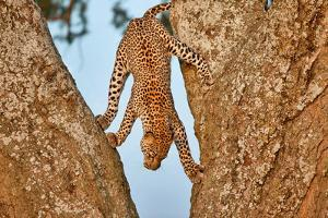 Upside Down by Alessandro Catta