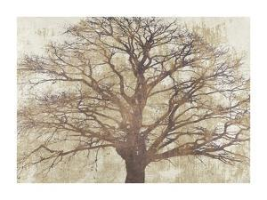 Sacred Oak by Alessio Aprile