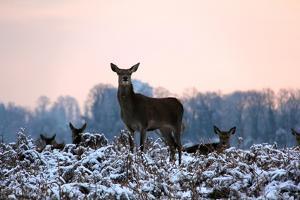 Deers in Bushi Park by Alessio Gaggioli photography