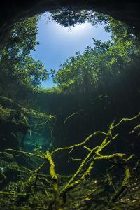 Old Tree Branches On The Floor Of Cenote Pool, Beneath The Forest Canopy With Snell'S Window Effect by Alex Mustard