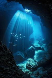 Schools of Pacific creolefish and Panamic sergeant major swimmingin an underwater cavern by Alex Mustard
