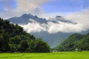 Thatched cottages and rice paddy fields with misty mountains behind, Mai Chau, Vietnam, Indochina,  by Alex Robinson