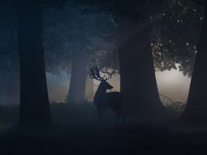 A Fallow Deer Male Buck, Dama Dama, in Autumn Mist by Alex Saberi