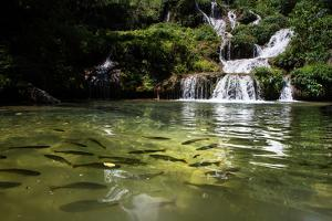A Waterfall and Fish in the Rio Do Peixe in Bonito, Brazil by Alex Saberi