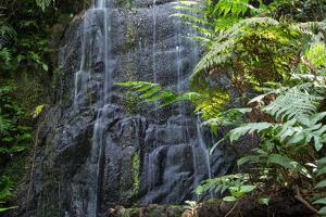 A Waterfall in the Mountain Jungles of the Serra Da Mantiqueira in Sao Paulo State by Alex Saberi