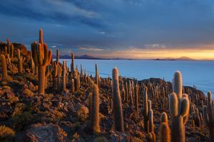 Cacti on the Isla Del Pescado Above the Salar De Uyuni at Sunset by Alex Saberi