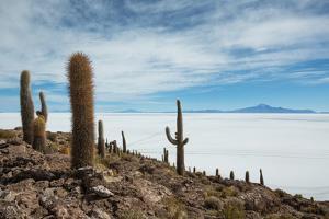 Cacti on the Isla Del Pescado Above the Salar De Uyuni by Alex Saberi