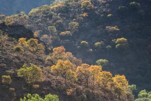 Colorful Trees in Torotoro National Park by Alex Saberi