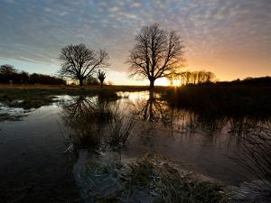 Early Winter Morning Reflection of Trees in a Flooded Icy Grassland in Richmond Park by Alex Saberi