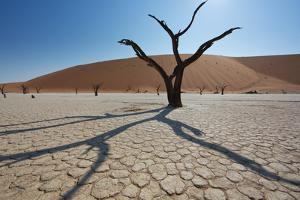 The Dead Acacia Trees of Deadvlei at Sunrise by Alex Saberi