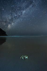The Milky Way Above a Crab on a Beach by Alex Saberi