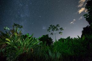 The Milky Way Above the Ubatuba Jungle at Night by Alex Saberi