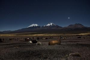 Venus Glows in the Night Sky as Llamas Settle Down to Sleep by Alex Saberi