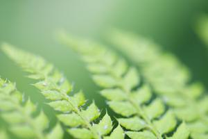 Scaly Male Fern, Leaves, Close-Up, Detail by Alexander Georgiadis