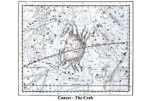 Cancer - the Crab by Alexander Jamieson