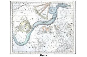 Hydra by Alexander Jamieson