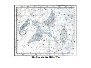 The Swan in the Milkyway by Alexander Jamieson
