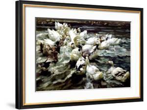 Ducks Gathering by Alexander Koester