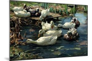 Ducks in a Pool by Alexander Koester