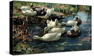 Ducks in a Pool by Alexander Koester
