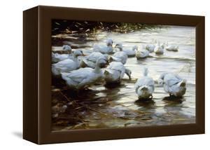 Ducks in Shallow Water Reed; Enten in Flachem Schilfwasser by Alexander Koester