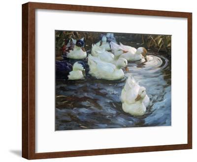 Ducks on a Pond, C1884-1932