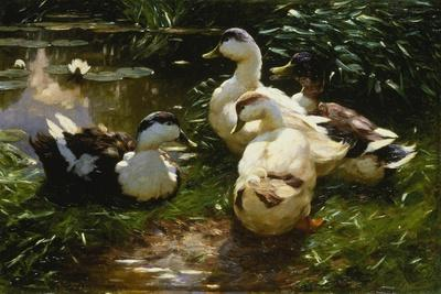 Ducks on a Pond with Waterlilies