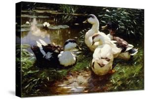 Ducks on a Riverbank by Alexander Koester