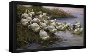 Ducks on the Lakeshore by Alexander Koester