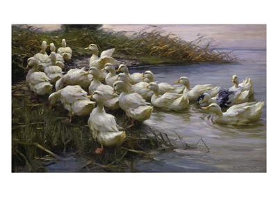 Ducks on the Lakeshore
