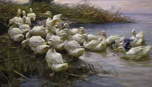 Ducks on the Lakeshore by Alexander Koester